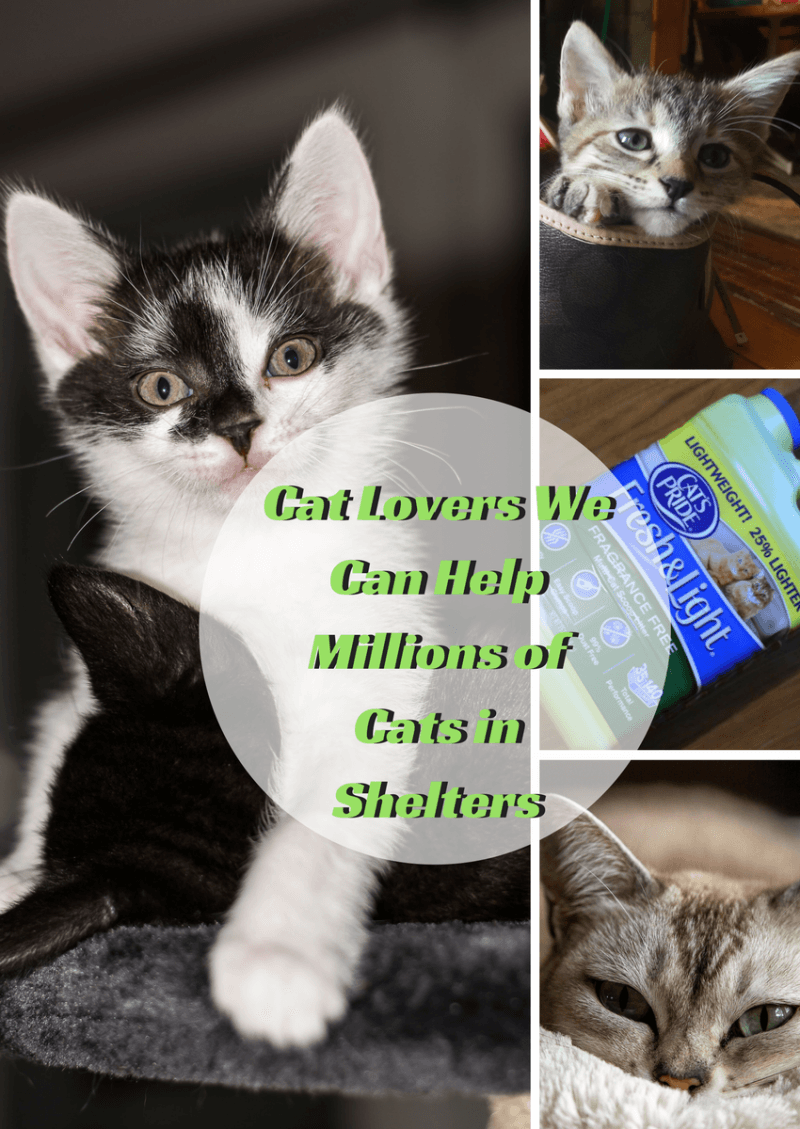 Cat Lovers We Can Help Millions of Cats in Shelters