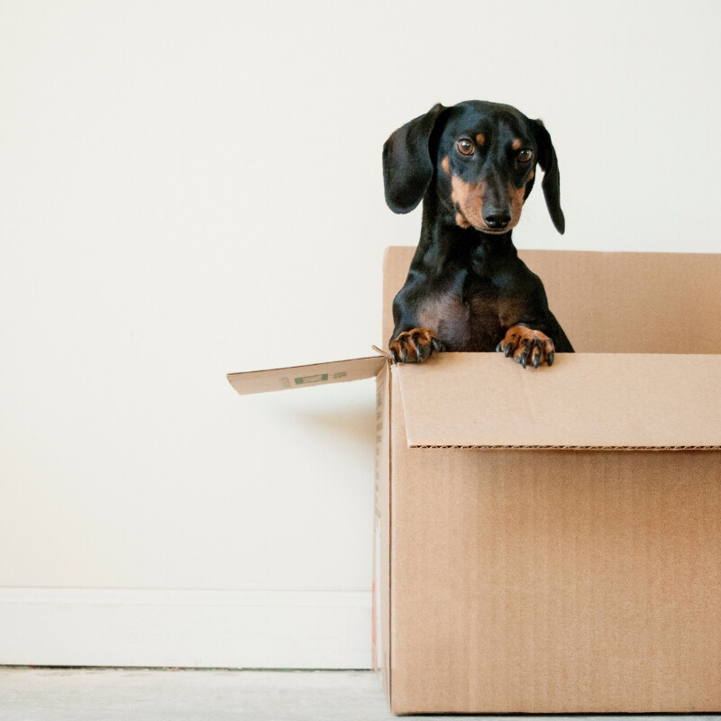 PLANNING A MOVE- TIPS ON MOVING A HOUSE EFFICIENTL