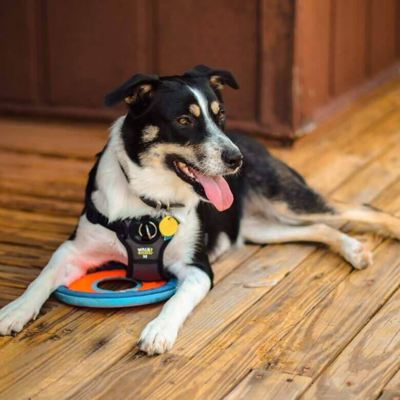 Types of Service Dogs: An Expert Service Dog Trainer Explains 1