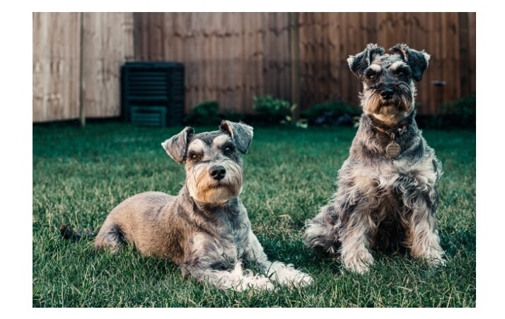 Lifestyle Adjustments for Helping Your Dog With Cushing's Syndrome 2